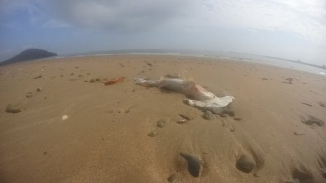 mystery-surrounds-the-reasons-behind-dozens-of-dead-sharks-being-washed-up-onto-a-queensland-beach